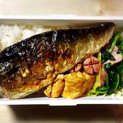 彼氏弁当/お弁当/地味弁 今日のお弁当〜。焼き鯖弁当! 魚一匹分入…