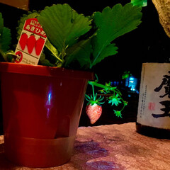 家庭菜園/いちご/よし味/二川/豊橋/冬/... お店のテーブル席に    いちご 🍓  …(1枚目)