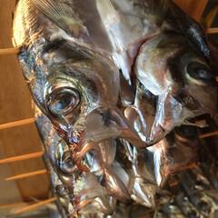 焼き魚/のんほいパーク/テラス/自家製/干物/鯵/... 《四季鮮菜 よし味》 今日は    あじ…