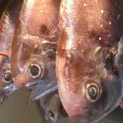 のんほいパーク/テラス/二川本陣/二川/豊橋/よし味/... 豆鯛の一夜干し  西浦産  豆鯛の一夜干…