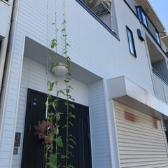 フォロー大歓迎/風景/ブルー 空まで届け美優の朝顔😊 学校で植えた朝顔…(3枚目)