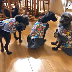 冬服/お揃いコーデ/犬/多頭飼い/犬服/ダイソー/... 母の新作✨✨  今年はサンリオです😍💕💕…