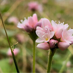 お散歩/かわいい/iPhone8撮影/花 この時期よく見るこのお花✨ ちっちゃくっ…