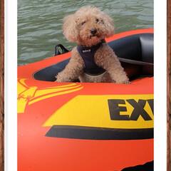 川遊び/キャンプ/夏休み/ペット 夏のキャンプ。愛犬プー太も川遊び。15歳…