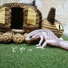 かぎ針編み/爬虫類のいる暮らし/レオパードゲッコー/ヒョウモントカゲモドキ/ハンドメイド お久しぶりです😄 早いもので12月…コロ…(5枚目)