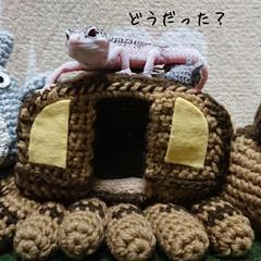 かぎ針編み/爬虫類のいる暮らし/レオパードゲッコー/ヒョウモントカゲモドキ/ハンドメイド お久しぶりです😄 早いもので12月…コロ…(2枚目)