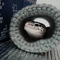 爬虫類のいる暮らし/レオパードゲッコー/ヒョウモントカゲモドキ/ハンドメイド ご無沙汰しております🙇 新型コロナに怯え…(10枚目)