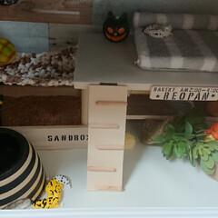 爬虫類のいる暮らし/レオパードゲッコー/ヒョウモントカゲモドキ/セリア/100均/DIY/... セリアの木材と余ってた木材でケージの中を…(1枚目)