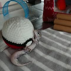 爬虫類のいる暮らし/レオパードゲッコー/ヒョウモントカゲモドキ/あみぐるみ/ダイソー/100均/... DAISOの毛糸でモンスターボール編んで…(2枚目)