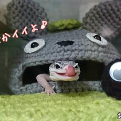 爬虫類のいる暮らし/レオパードゲッコー/編み物/ヒョウモントカゲモドキ/100均/DIY/... 引きこもり生活なので、ちょこちょこ作って…(2枚目)