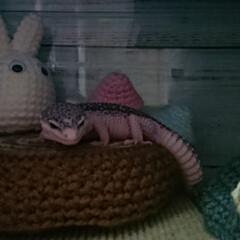 あみぐるみ/かぎ編み/爬虫類のいる暮らし/レオパードゲッコー/ヒョウモントカゲモドキ/100均/... レイちゃんのトトロハウスに葉っぱのアーチ…(5枚目)