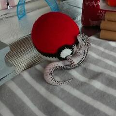 爬虫類のいる暮らし/レオパードゲッコー/ヒョウモントカゲモドキ/あみぐるみ/ダイソー/100均/... DAISOの毛糸でモンスターボール編んで…(1枚目)