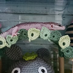爬虫類のいる暮らし/レオパードゲッコー/ヒョウモントカゲモドキ/100均/ハンドメイド レイちゃん、葉っぱのアーチ使ってくれまし…(1枚目)