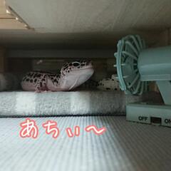 爬虫類のいる暮らし/レオパードゲッコー/ヒョウモントカゲモドキ/リミアで大喜利 今年の夏は暑すぎる…(1枚目)