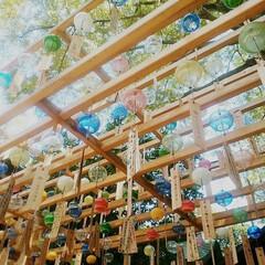 川越氷川神社/縁むすび風鈴/川越/蔵造り 今年の夏は、夫婦で川越氷川神社の 縁むす…