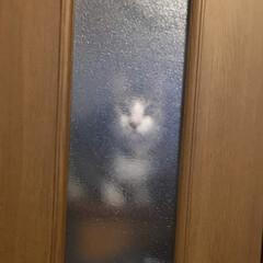 保護猫/LIMIAペット同好会/わんこ同好会/にゃんこ同好会/夏模様 久々の投稿です(*^^*) チロさんがリ…(2枚目)