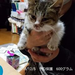 元野良猫/保護猫/LIMIAペット同好会/ペット/ペット仲間募集/犬/... 3/5でチロを保護して3ヶ月になりました…