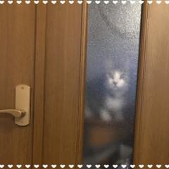 保護猫/LIMIAペット同好会/わんこ同好会/にゃんこ同好会/夏模様 久々の投稿です(*^^*) チロさんがリ…(1枚目)