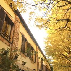 銀杏/イチョウ/東京/白金台/秋/おでかけ/... 昨年の晩秋の白金台。 今夏、取り壊されて…