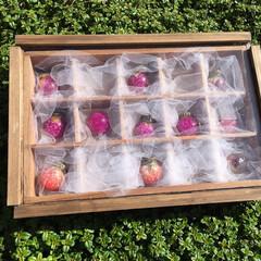 千日紅/ガラスドーム/タイム/DIY/雑貨/ダイソー/... たくさん作った千日紅のガラスドームを木箱…