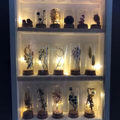 陶芸作品/ドライフラワー/ガラスケース照明/植物のある暮らし/にゃんこ/植物標本/... 植物標本 ダイソーのA3の額に合わせて、…