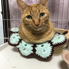 陶芸/流木アレンジ/猫ハウス/ペット/猫/100均/...
