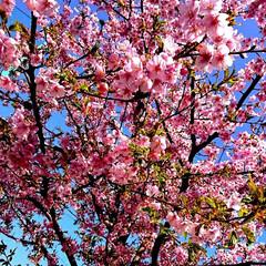 風景/小さい春 久方ぶりです‼️ ……春ですねぇ🌸