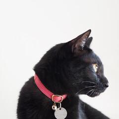 黒ねこ/黒猫