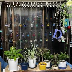 手作り/観葉植物/ダイソー/セリア/ハルコレ/スワロフスキー/... 出窓に観葉植物置いて上のスペースが寂しか…(2枚目)