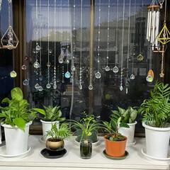 手作り/観葉植物/ダイソー/セリア/ハルコレ/スワロフスキー/... 出窓に観葉植物置いて上のスペースが寂しか…(1枚目)