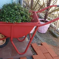 再利用/一輪車/ボロボロ/フォロー大歓迎/LIMIAインテリア部/LIMIA手作りし隊/... 一輪車のペンキ乾いたので  お花を置いて…