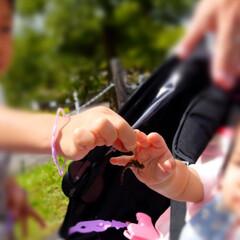 0歳児/年少/幼稚園児/兄妹/家族旅行/夏休み 夏の終わりに北海道で秋の始まりを…  翌…