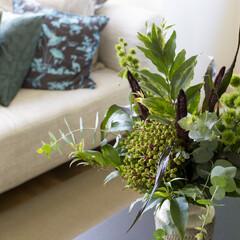 グリーン 植物があちこちに飾られている。