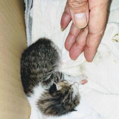 超小さい😍/保護猫/子ねこ へその緒の付いた子猫を保護けど 猫アレル…(2枚目)