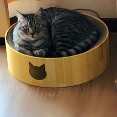 猫壱 バリバリボウル 猫柄 丸型爪とぎベッド | 猫壱(その他ペット用品、生き物)を使ったクチコミ「LIMIAのフォトコンテストで頂いた、a…」
