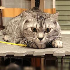猫派/LIMIAペット同好会/にゃんこ同好会/至福のひととき/風景/暮らし/... 狙ってますw やまと君撮る時、いつもねこ…