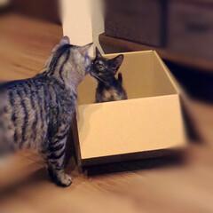 保護猫/住まい/暮らし/LIMIAペット同好会/にゃんこ同好会/うちの子ベストショット えっε-(´∀`; ) 昨日は、早朝から…