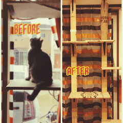 キャットウォーク/DIY/猫/インテリア キャットウォークを作り直しました。 以前…