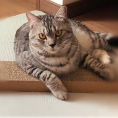猫派 犬猫どっちも派だけど… 1枚目: カルカ…
