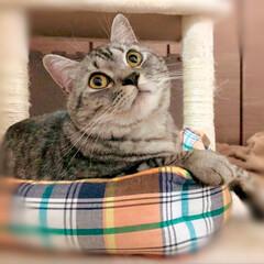 バースデーフード/バースデー/やまと君/猫派/令和の一枚/LIMIAペット同好会/... やまと君の1歳バースデー🎉 猫用スープと…