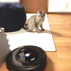 ルンバ/やまと君/令和元年フォト投稿キャンペーン/LIMIAペット同好会/にゃんこ同好会/風景/... 我が家にやっとお掃除ロボが来ました。 試…
