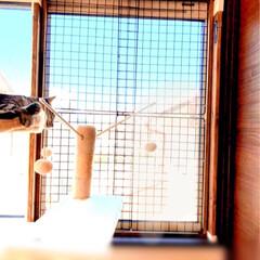 脱走防止/保護猫/DIY/住まい/暮らし/LIMIAペット同好会/... 連日DIYです 笑 2階のにゃんこ部屋も…