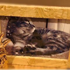 お出掛け/保護猫/やまと君/手作り/LIMIAペット同好会/にゃんこ同好会/... 主人のお盆休みは少し早く終わって 私も今…
