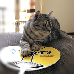 保護猫/やまと君/令和の一枚/LIMIAペット同好会/にゃんこ同好会/至福のひととき/... 暑すぎて、エアコンつけててもうちわを出し…