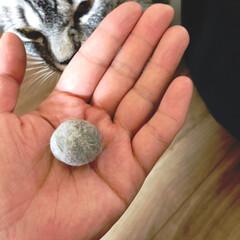 猫のおもちゃ/やまと君/LIMIAペット同好会/にゃんこ同好会/至福のひととき/ハンドメイド/... 羊毛フェルトボールのような、猫毛ボールを…