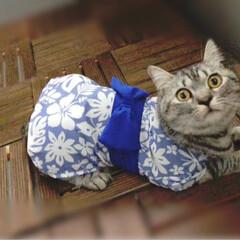 夕涼み/保護猫/やまと君/LIMIAペット同好会/にゃんこ同好会/至福のひととき/... またダイソーで浴衣見つけた! お盆休みは…