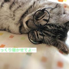 やまと君/猫派/令和の一枚/LIMIAペット同好会/にゃんこ同好会/ハンドメイド/... 針金で、伊達メガネを作って寝てるやまと君…