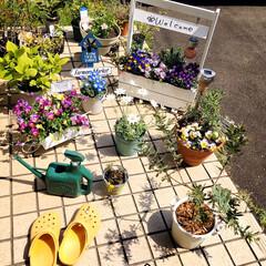 至福の時間/KOMERI/ガーデン雑貨/花/ガーデニング/庭/...         2020.4.17(金)…