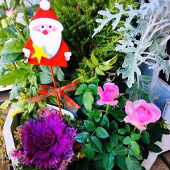 クリスマス/クリスマス雑貨/ガーデニング/寄せ植え/KOMERI/クリスマス2019/...        2019.12.21(土)…