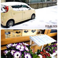 フォロー大歓迎/サイネリア/花/雪/風景/住まい/...        2020.2.9(日)  …
